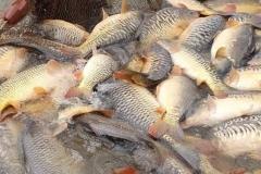 Quintons Orchard Fish Farm